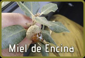 Miel de Encina. Miel natural Selectmiel
