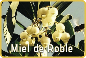 Miel de Roble. Miel natural Selectmiel