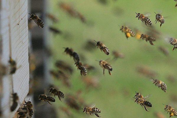 comprar miel natural