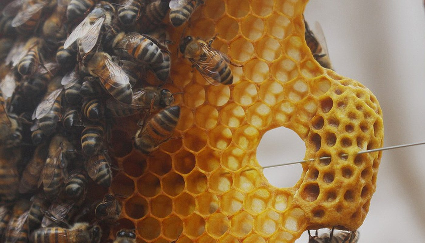 Miel de flores-selectmiel
