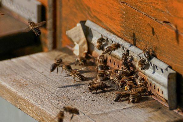 miel-natural-encina-flores-roble-selectmiel